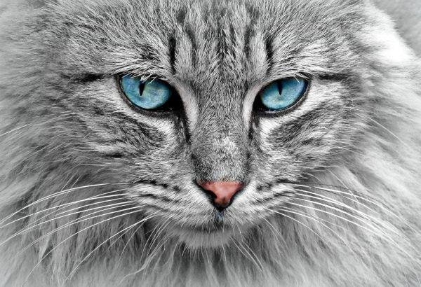 Alles, was Sie über Katzen wissen sollten